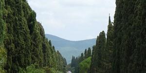 rentals in San Vincenzo